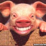 steht das schwein auf einem bein